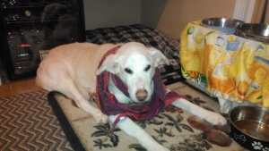 Fred wanted to try on my new CAbi scarf